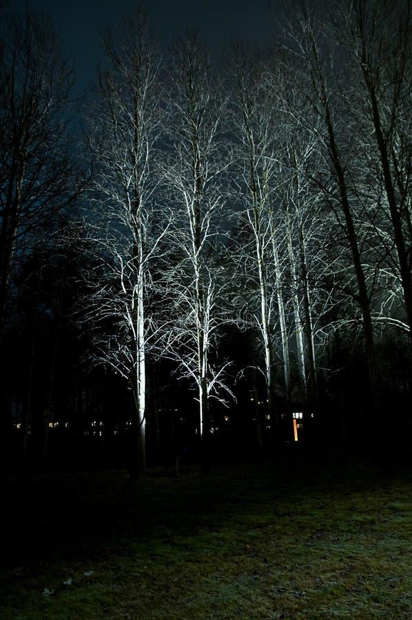Download Luz del otoño imagen de archivo. Imagen de festival, caída - 7288653