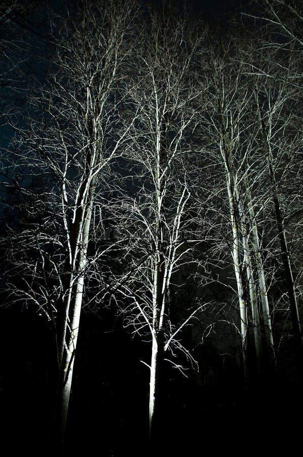 Download Luz del otoño imagen de archivo. Imagen de resplandor - 7288699