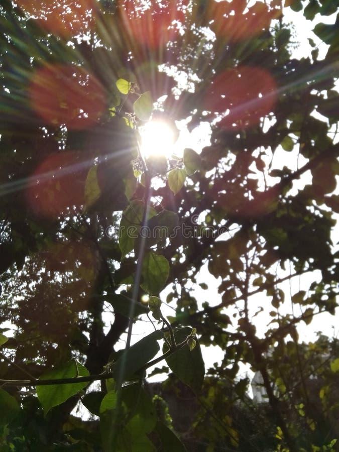 Luz del sol fotografía de archivo