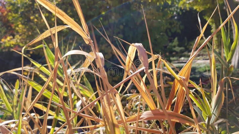 Luz del sol brillante en arbustos coloridos de la hierba de las plantas de jardín fotos de archivo libres de regalías