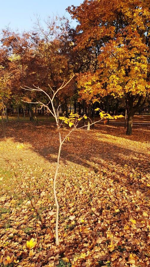 Luz del sol brillante en pequeño árbol desnudo con las ramas finas imagen de archivo libre de regalías