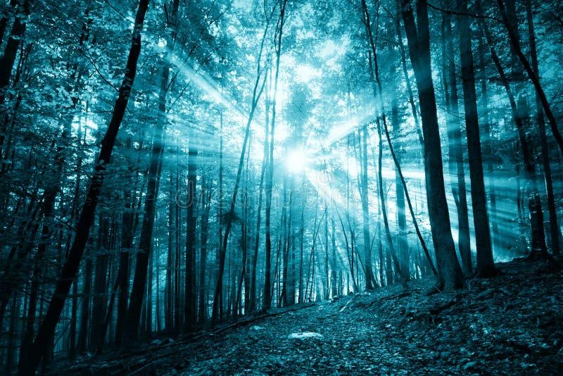 Luz del sol coloreada azul marino fantasmagórica en paisaje del bosque foto de archivo libre de regalías