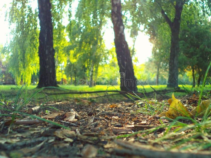 Luz del sol de la hierba de la naturaleza fotografía de archivo libre de regalías