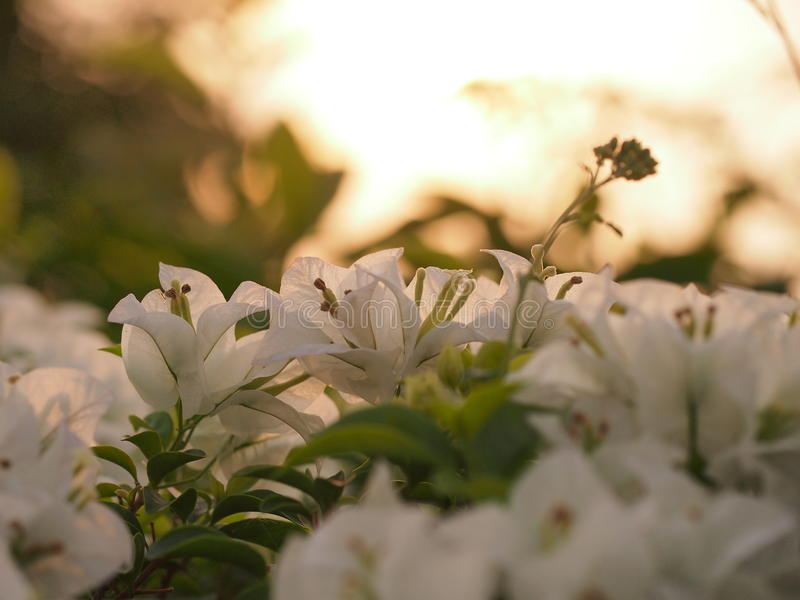 Luz del sol de la mañana imagenes de archivo