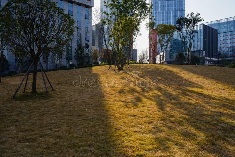 Luz del sol de la tarde del invierno en césped a través de edificios modernos imagen de archivo