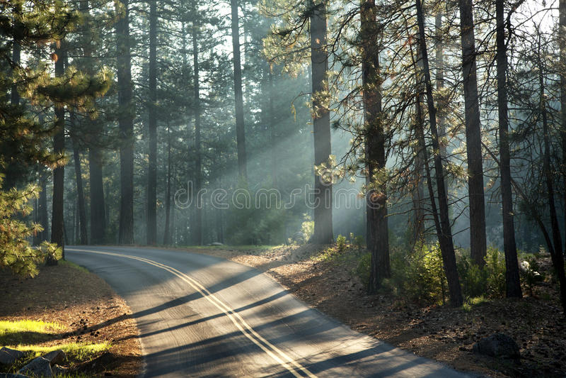 Luz del sol de Yosemite fotografía de archivo