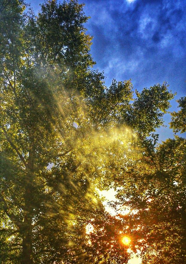 Luz del sol del ANG del bosque del cielo de Sun fotos de archivo