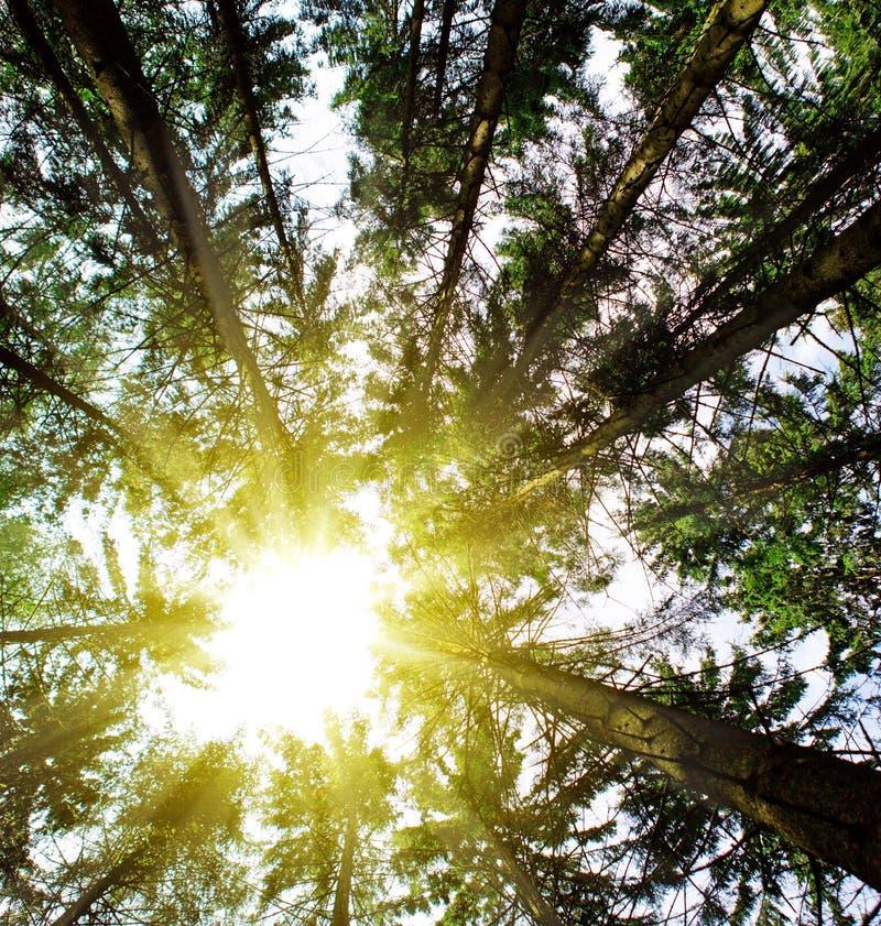 Luz del sol en bosque imagenes de archivo
