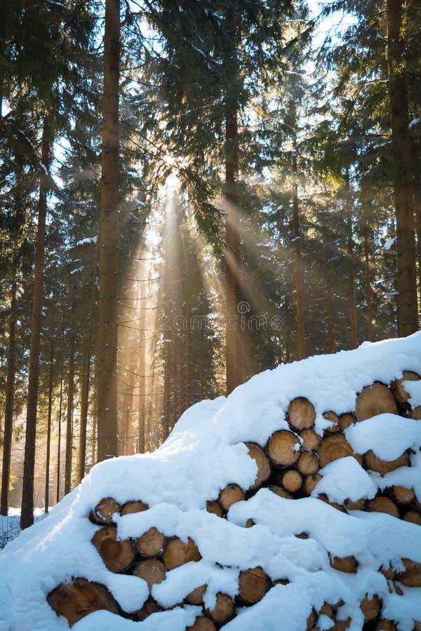 Luz del sol en bosque del invierno imagen de archivo libre de regalías