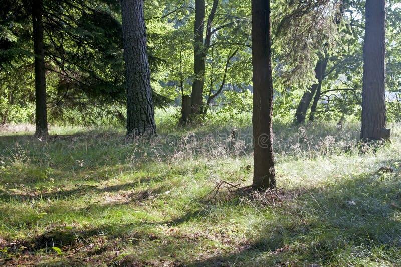 Luz del sol en el bosque fotografía de archivo