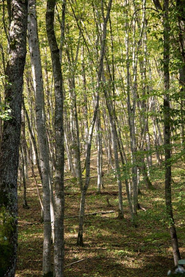 Luz del sol en el bosque verde en oto?o fotos de archivo libres de regalías