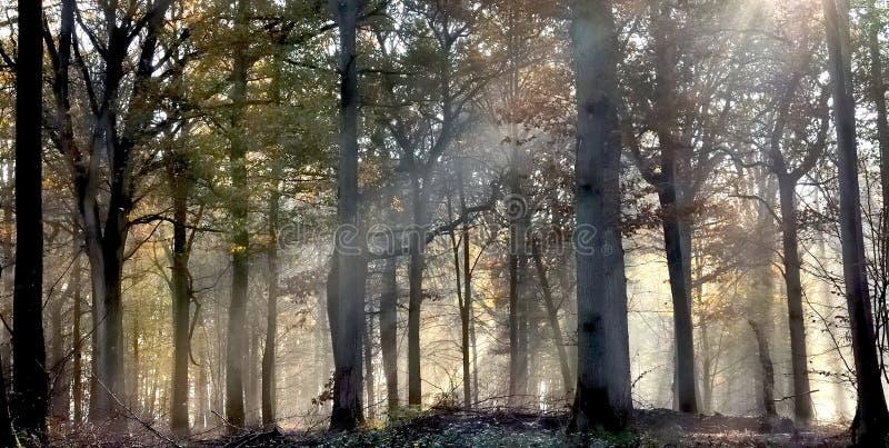 Luz del sol en una maleza brumosa fotografía de archivo libre de regalías