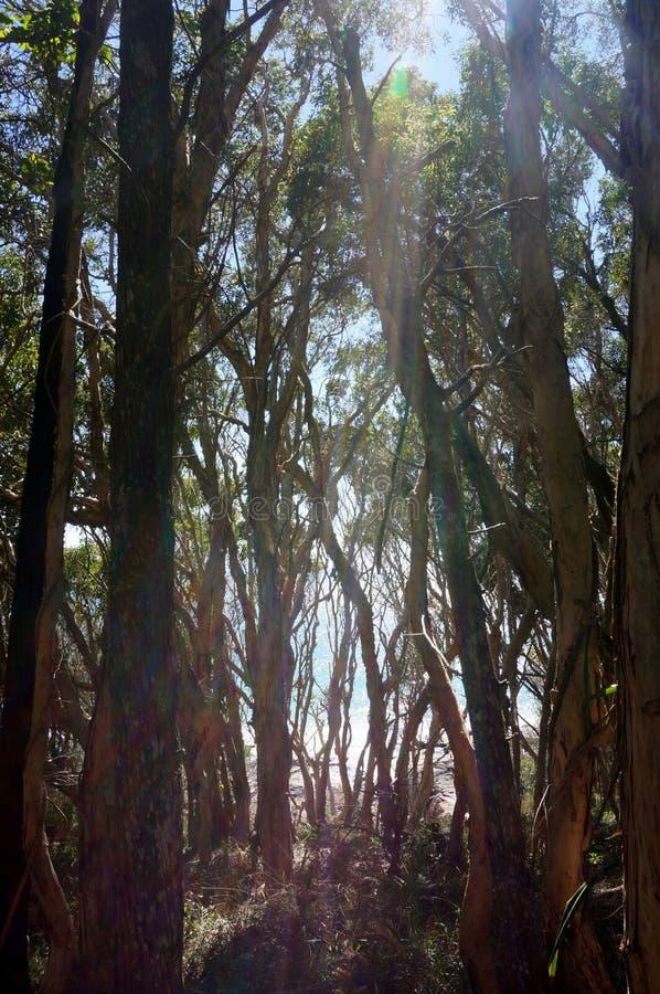 Luz del sol entre los árboles fotografía de archivo
