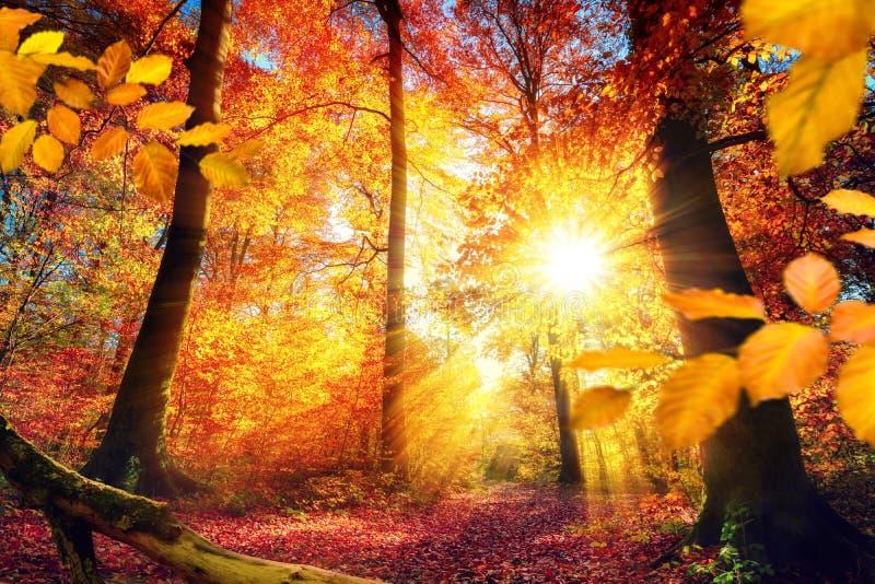 Luz del sol hermosa del otoño en un bosque foto de archivo libre de regalías