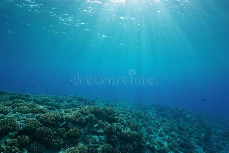Luz del sol natural subacuática del suelo marino del arrecife de coral foto de archivo libre de regalías