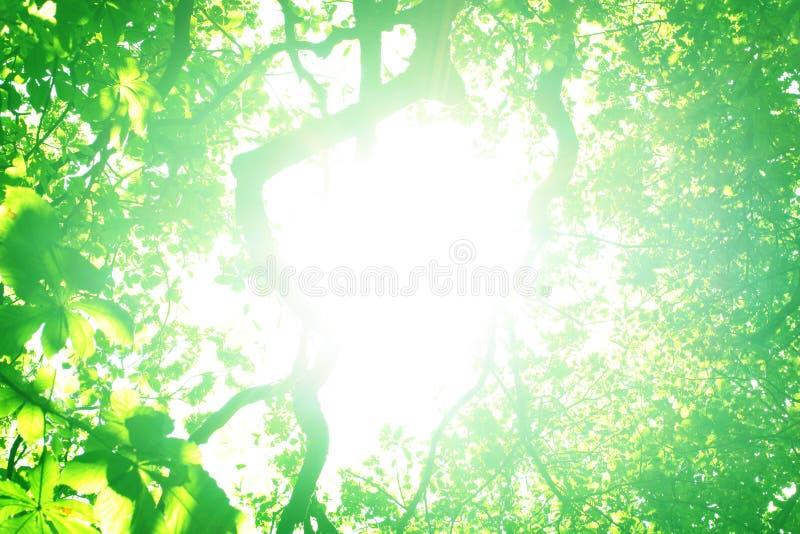 Luz del sol que brilla a través de árboles fotografía de archivo