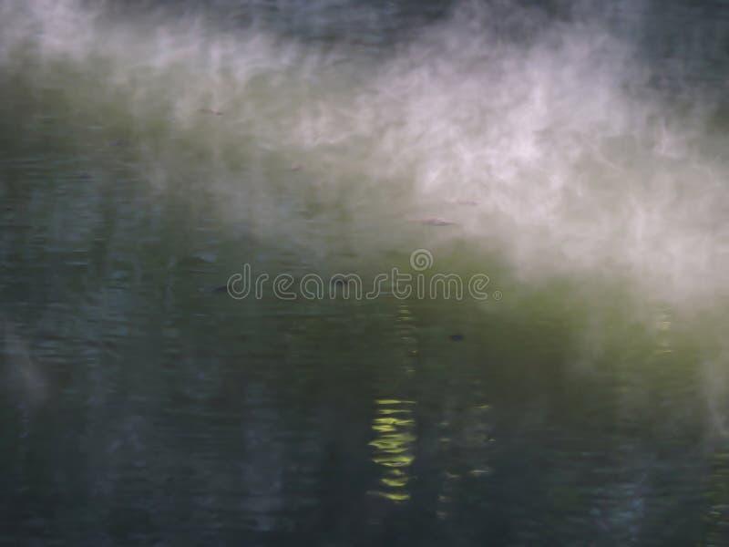 Luz del sol que destaca la natación de los pescados en Misty Pond imagenes de archivo