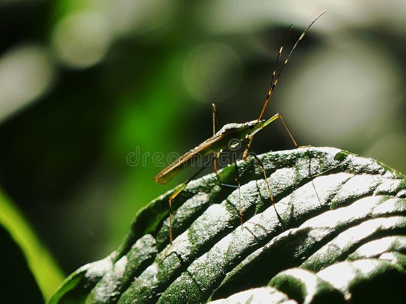 Luz del sol que refleja en la hoja y el insecto fotografía de archivo