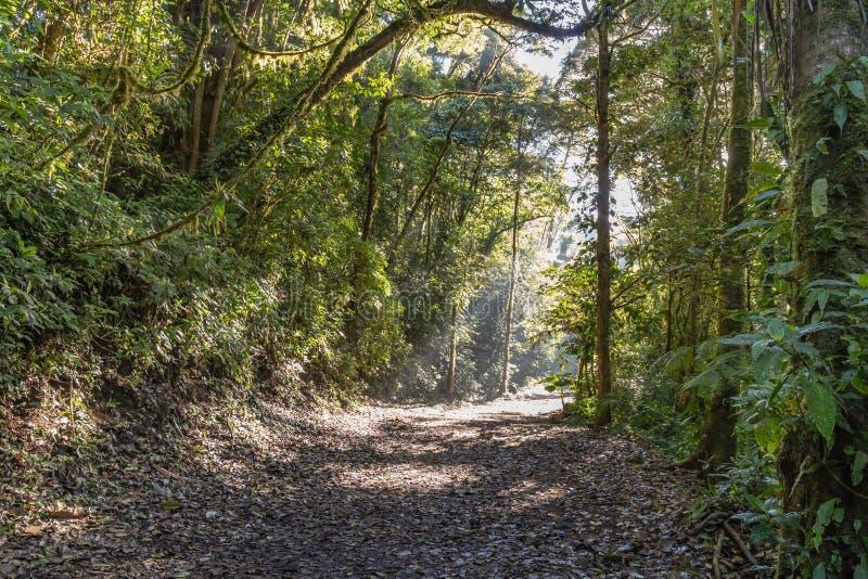 Luz del sol que se rompe a través de los árboles en un bosque de la selva imagen de archivo