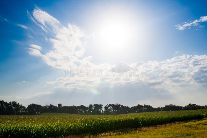 Luz del sol sobre un campo de maíz imágenes de archivo libres de regalías