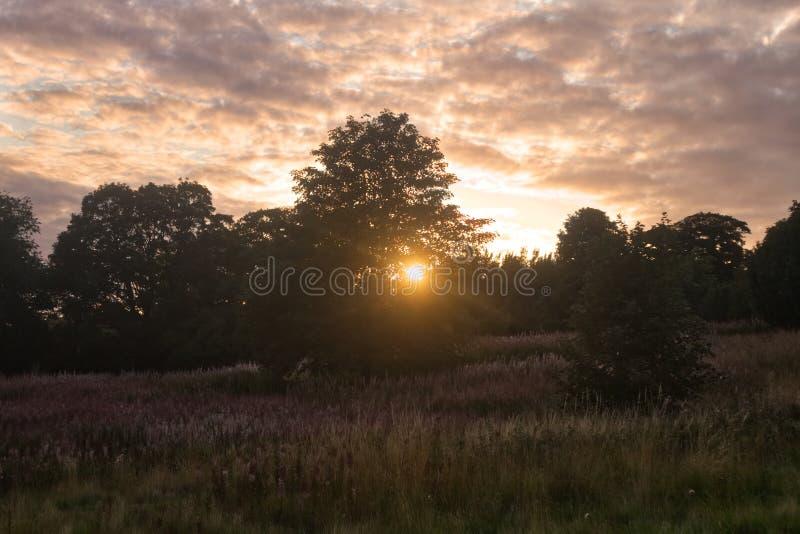 Luz del sol a través del árbol en una colina imagenes de archivo