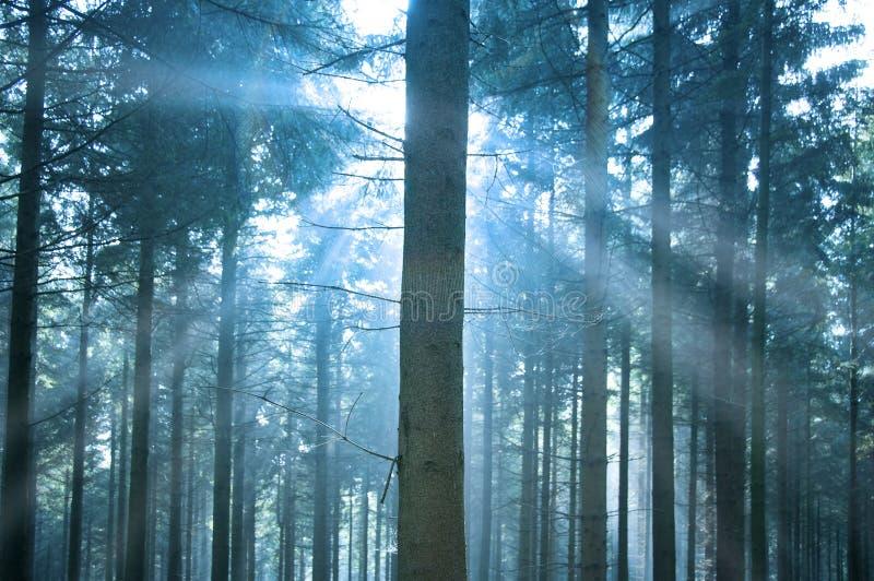 Luz del sol a través del bosque fotos de archivo libres de regalías