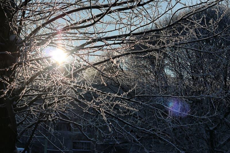Luz del sol y nieve del paisaje del bosque del invierno foto de archivo libre de regalías