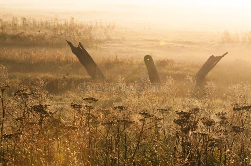 Luz do amanhecer com névoa foto de stock