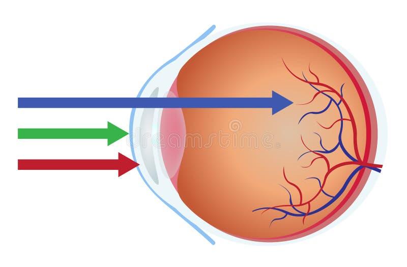 Luz do olho e do azul ilustração do vetor