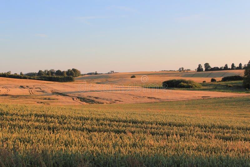 Luz do por do sol sobre o campo na temporada de verão no Polônia imagem de stock royalty free