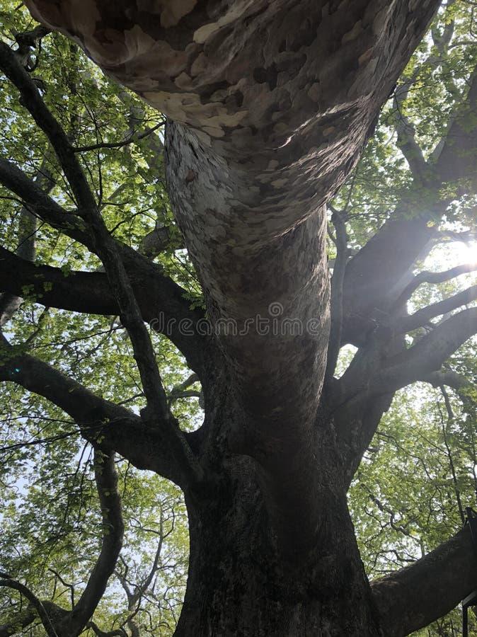 Luz do sol através dos ramos de árvore fotos de stock royalty free