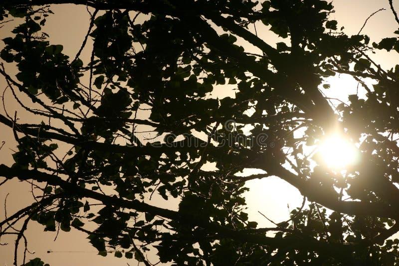 Luz do sol através dos ramos de árvore fotografia de stock