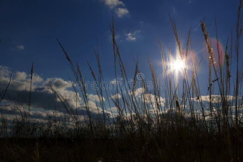 Luz do sol calma na grama do primeiro plano. fotografia de stock royalty free