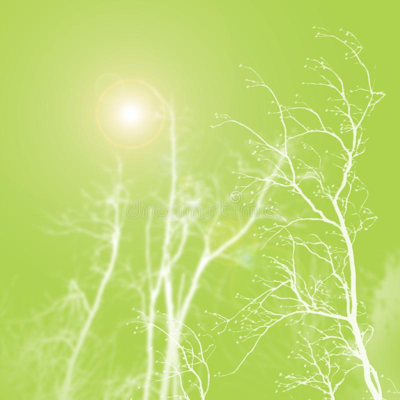 Luz do sol do cal imagem de stock