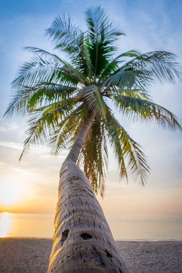 Luz do sol do mar fotografia de stock royalty free