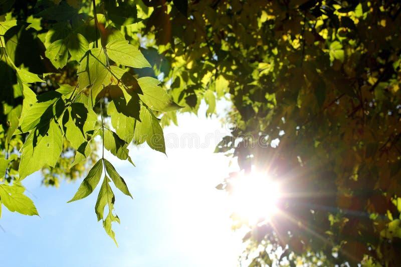 Luz do sol do verão através das árvores imagem de stock