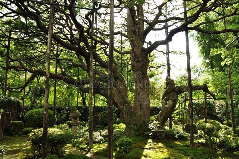 Luz do sol e árvores foto de stock royalty free