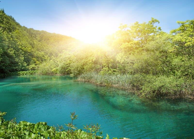 Luz do sol em uma floresta imagem de stock royalty free