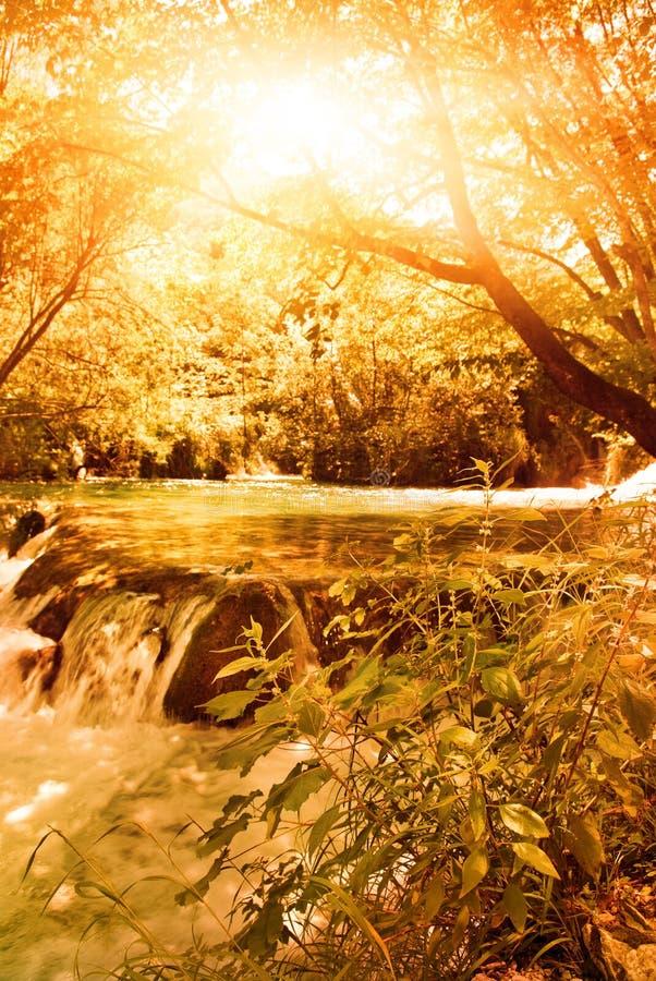 Luz do sol em uma floresta do outono imagens de stock royalty free