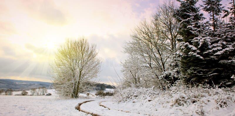 Luz do sol do inverno através da árvore Estrada do inverno e árvore congelada foto de stock royalty free