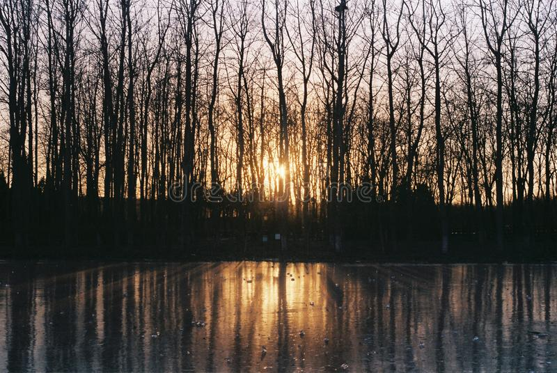 Luz do sol do inverno e reflexão do gelo foto de stock
