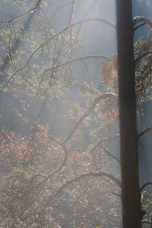 Luz do sol na floresta imagem de stock royalty free