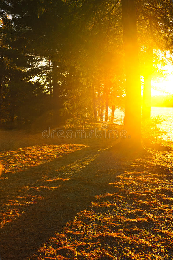 Luz do sol na floresta da noite perto do lago foto de stock