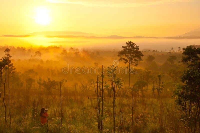 Luz do sol na névoa da manhã fotos de stock royalty free