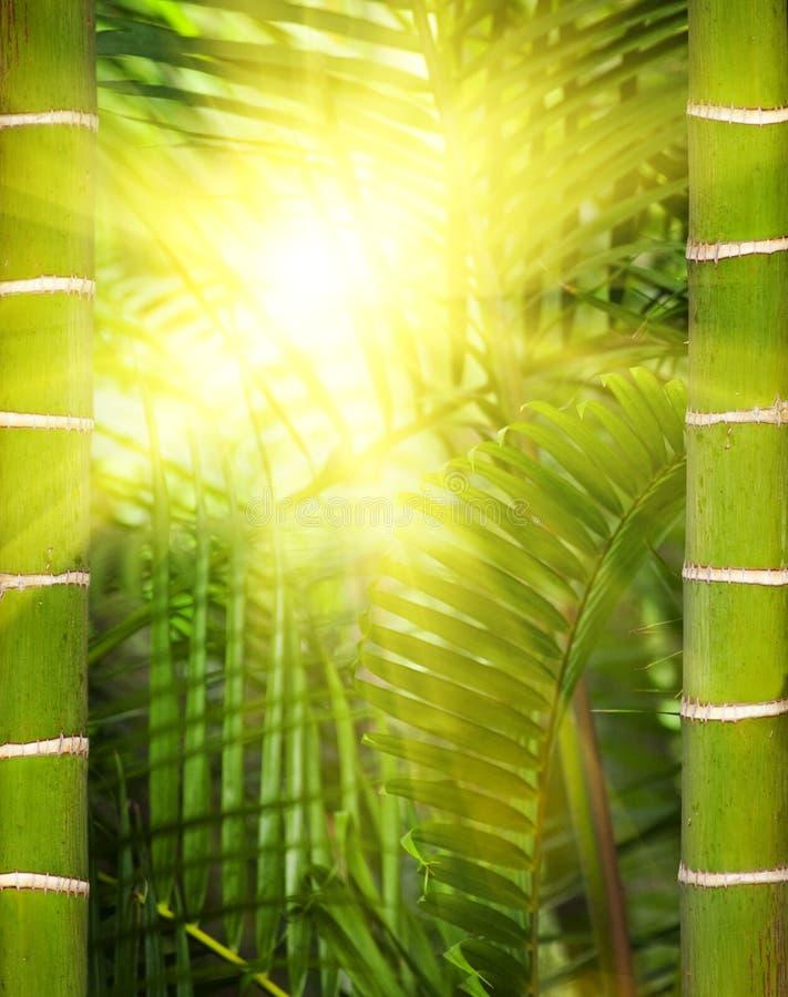 Luz do sol na selva imagem de stock royalty free