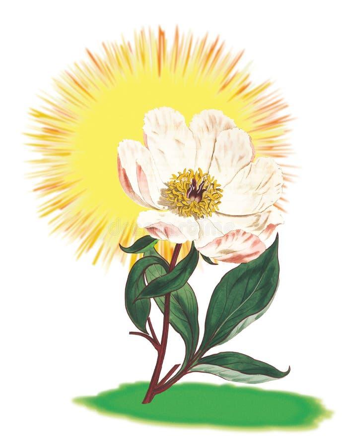 Luz do sol Rose Plant Block foto de stock