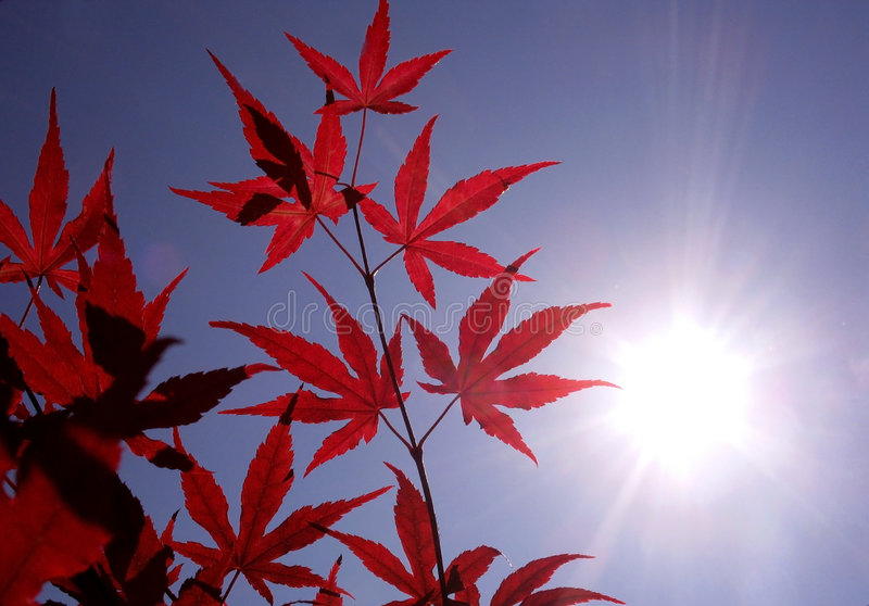 Luz do sol um bordo japonês vermelho fotos de stock royalty free