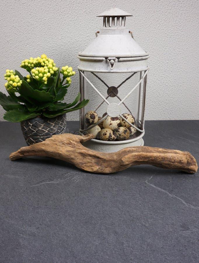 Luz do vento com a planta interna do kalanchoe com ovos da páscoa e madeira lançada à costa no fundo cinzento imagens de stock