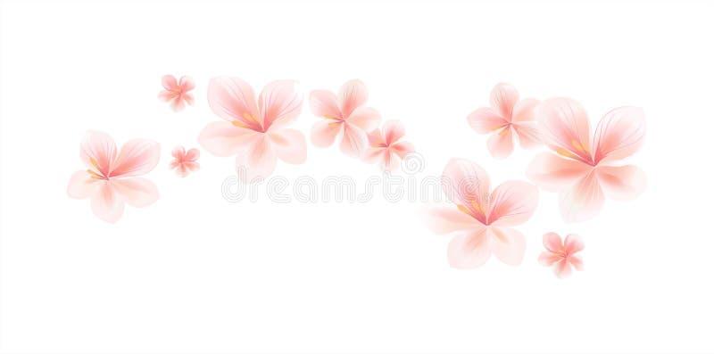 Luz do voo flores cor-de-rosa do pêssego isoladas no fundo branco Ap ilustração stock