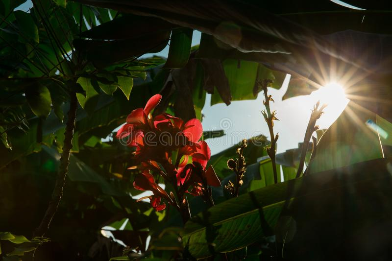 Luz e flor de céu fotos de stock royalty free